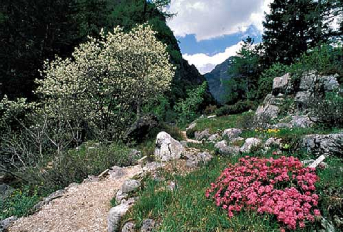 Picture of Alpine botanical garden Julijana